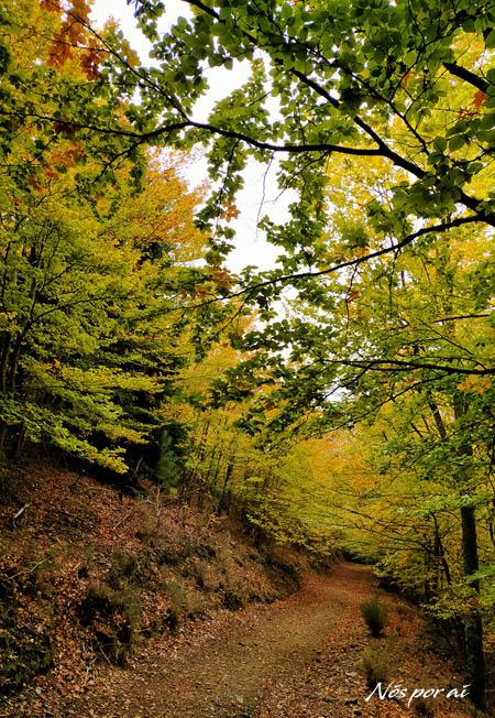 Bosque de São Lourenço